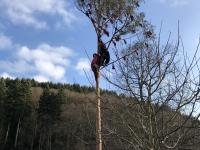 Narrenbaum-Bändele-Narrenblättle